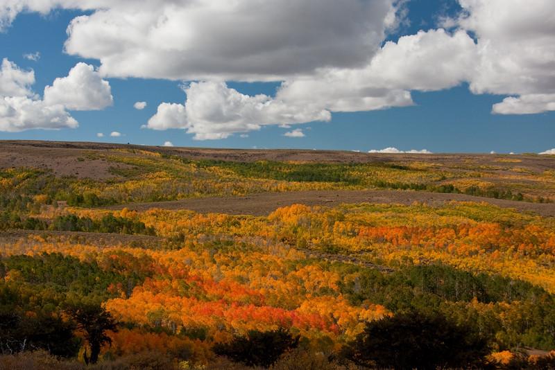 Steen's Fall Colors - Rich Seiple