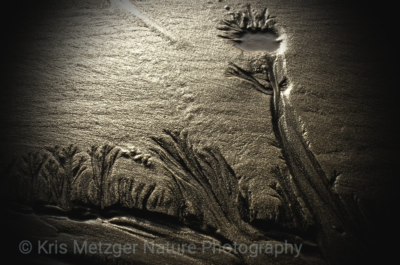 """Reaching For The Light""  Walking along beach one evening noticed these totally natural water eroded etchings in sand. Amazing artistry by Mother Nature."