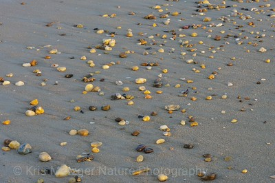"""Sand Pebbles"""