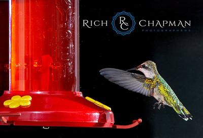 © Rich Chapman Photographers LLC
