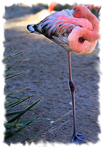 T_Flamingo Soft.jpg