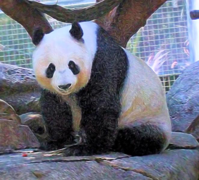 T_Panda 1.jpg