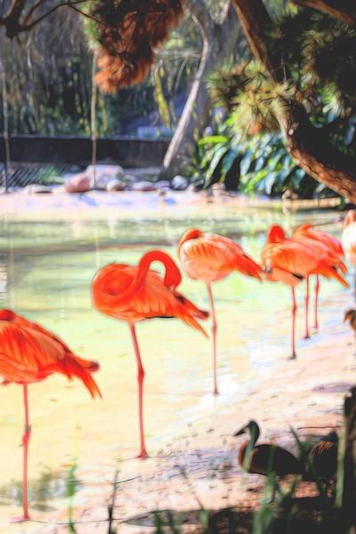 T_Flamingo Line up.jpg