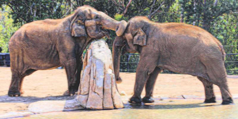 T_No Peaking elephants.jpg