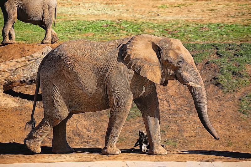T_Baby elephant walking.jpg