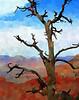 Tree, Grand Canyon