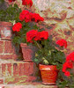 Potted Plant I