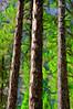 Trees,Yosemite
