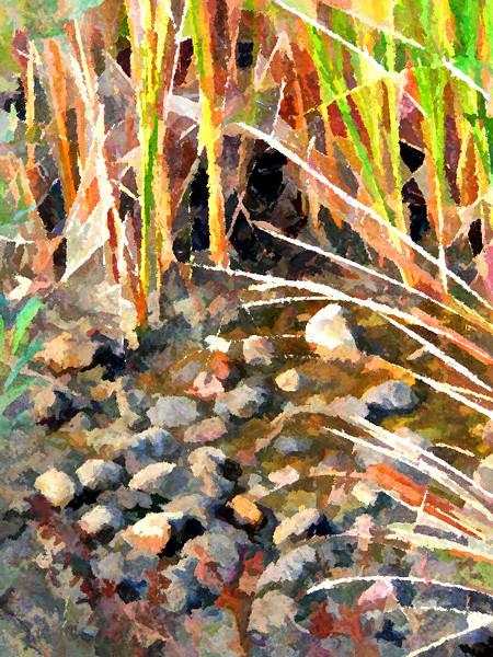 San Clemente Canyon, San Diego CA: Rocks & Reeds