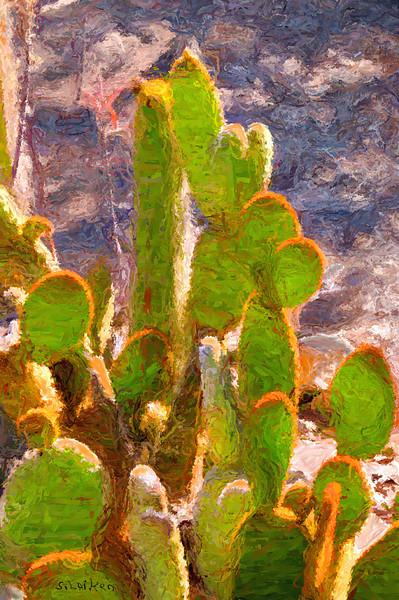 Cactus Garden, Temecula CA