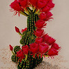 """""""Bloomin Cactus"""", in my back yard. (sold) (prints available)."""