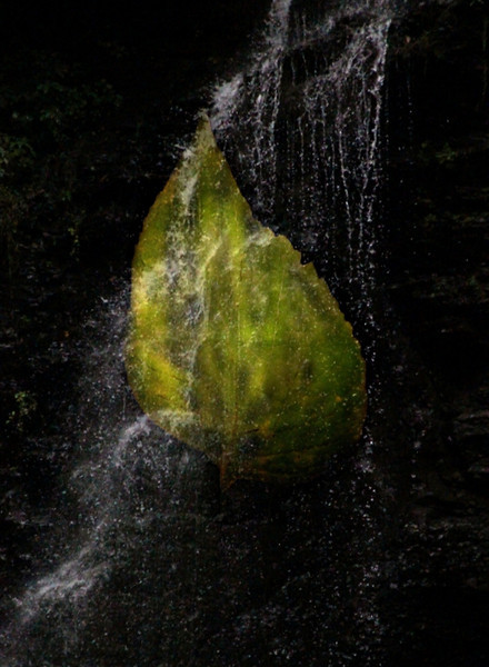 FALL.....A leaf falling to it's watery grave. Best viewed @ XL