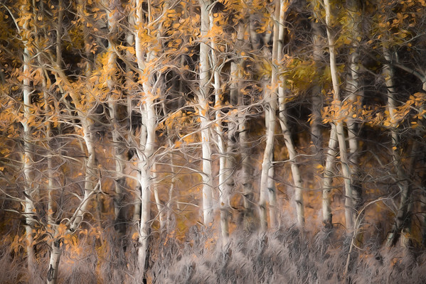 March 19 - Whispering Fall Aspens #1