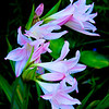 0709Duke Gardens098