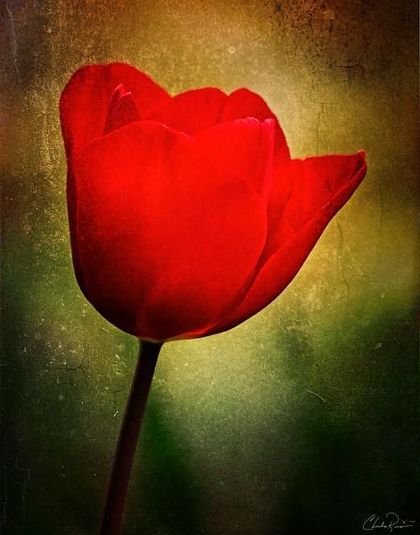 Red Flower Power