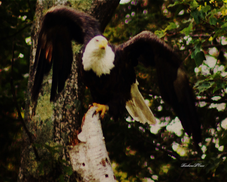 And the Eagle Flies