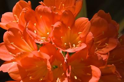 Flowers - 00011