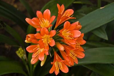 Flowers - 00003