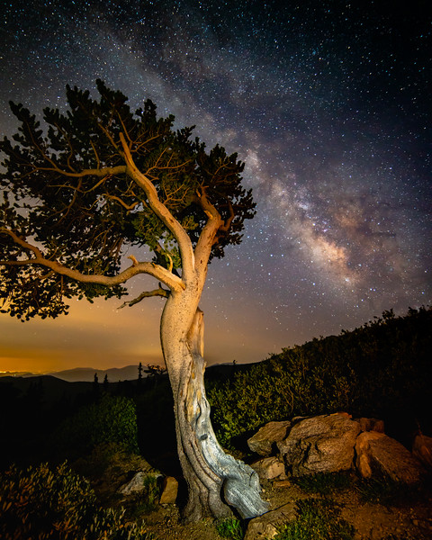 Astrophotography on Mt. Evans | Milkyway Core hangs delicately over this Colorado Bristlecone Pine Tree | Mt. Evans Wilderness