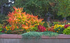 While near Denver, Barbara and I went to the Denver Botanic Gardens (one of my favorite gardens in the country) and the color was still brilliant and abundant since there had been no freeze. We also watched the vice-presidential debate. October, 2016.