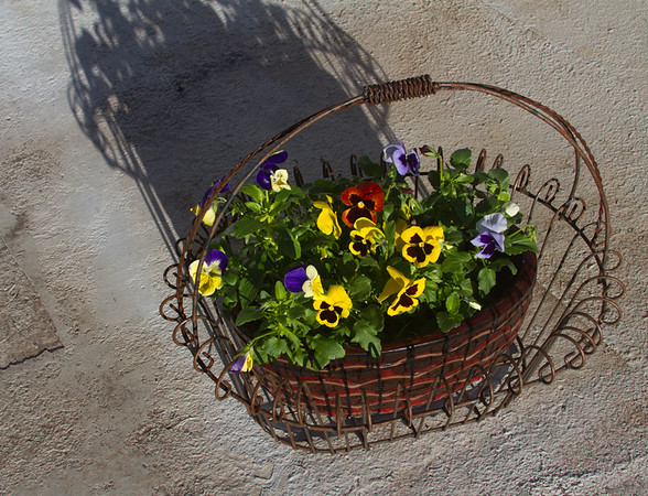 Continuing my mini gardening effort, these pansies are the survivors in Texas.  The battle with freezing temps and axis deer is ongoing.  (The deer snacked on the other planter of posies.)  I do love those pansies!  December, 2016.