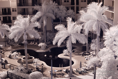 Wyndham Palm-Aire, Infrared (Pompano Beach, FL)
