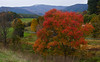 The autumn colors in western Virginia and West Virginia were spectacular! October, 2009.