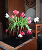 "This lovely tulip bouquet (near its end here) came via UPS just before Valentine's Day from the ""Valentine's Fairies"". Thank you, whoever you are!!!  February, 2014."