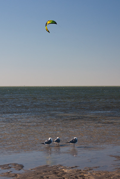 The gulls and windsurfers were sharing the same sea and sky. December, 2014.