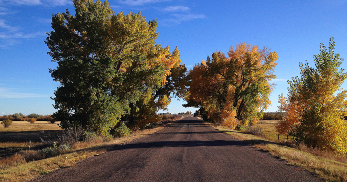 The autumn color here is in eastern Colorado. While driving the plains of Kansas/Colorado from Colby to La Junta the streams (usually in the distance) were lined with yellow trees, mostly cottonwoods.  October, 2014.