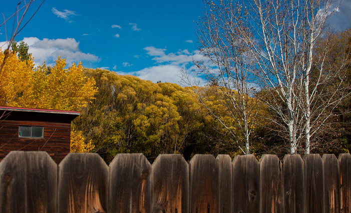The tree color out west was remarkable this year---from Montana to Kansas to New Mexico.  LOTS of yellow! October, 2014.