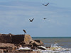 On the beach drive south of Port A. we saw a few people and lots of birds including the Brown Pelicans over a Great Blue Heron.  Note the gulf waters before the storm. October, 2015.