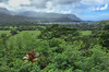 Overlooking Hanalei and Hanalei Bay – home of Puff the Magic Dragon, (lived by the sea. . . .). Amazing view on the North Coast.  November, 2015.
