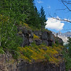 On the west side of the Divide was this cliff of wildflowers.  The flowers were awesome all along the Road.  I would drive by some,  turn around, go back, take shots, and turn around again.  No easy task on the Going To The Sun Road.  It was definitely a Wildflower Day!  July, 2017.