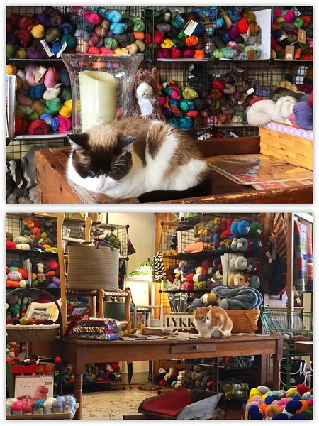 Cats in a yarn shop.  Love it!  This is the Tinsmith's Wife in Comfort where I've gone this winter with friends: Dawn, Kathy, and Deanna (knitters here). If they don't have it, you don't need it.  ;-)<br /> February/March, 2017.