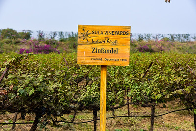 one of the many varietals at Sula