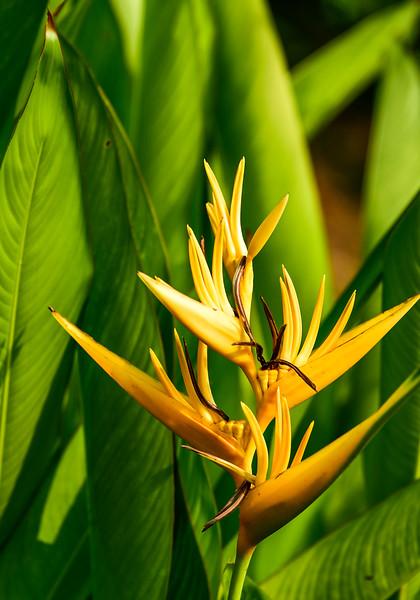 Kumarakom - more flowers