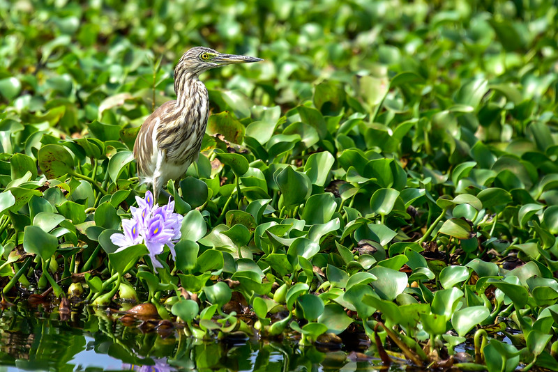 Kumarakom - backwater birds and flowers, they're everywhere