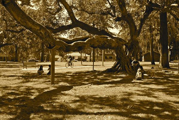 Parks Photo Challenge