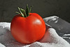"""One of my tomatoes. I really liked this shot of one of my """"celebrities."""""""