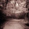 Week 39 - Path