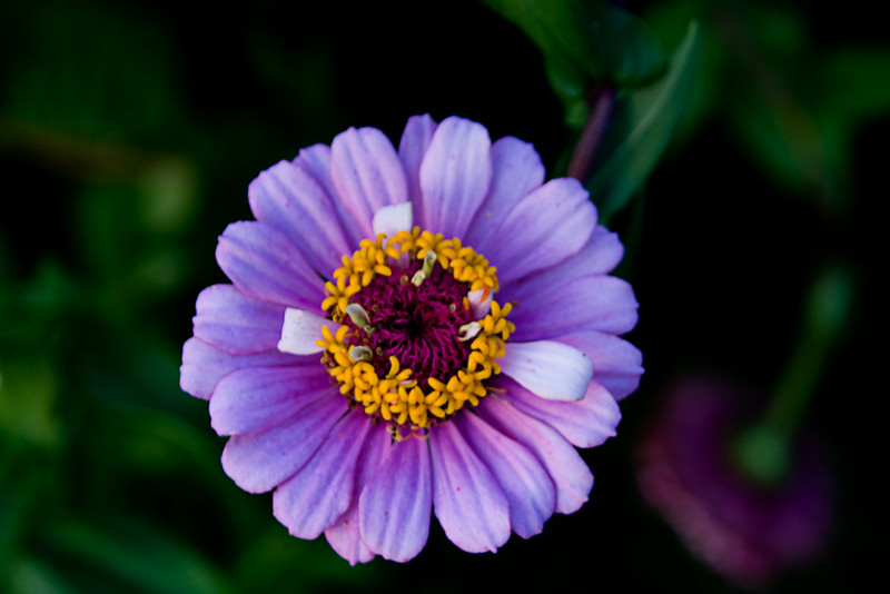 <center>Nice Flower<br>Khajuraho, India </center>
