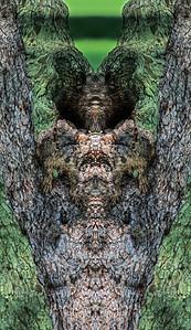 AnthonySchirer-MirrorMontage