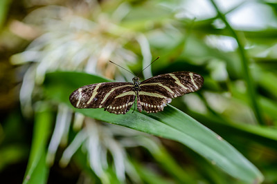 HMNS Cockrell Butterfly Center 04/2017