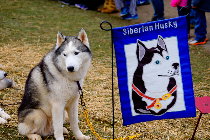 20160130_130850 - 0086 - Winter Days - Sled Dog Meet and Greet_LowRes