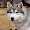 20160130_141122 - 0255 - Winter Days - Sled Dog Meet and Greet_LowRes