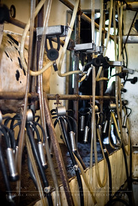 The milking room.   Every day, cows are brought into this room to be milked. Unlike the old days of manual milking, the Buell's make use of time saving equipment.