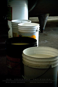 Raw milk collected from the cows are temporarily put in buckets before they go through a pasteurization process. The pasteurized milk then goes in a holding tank before it is collected by an 18-wheel container truck.