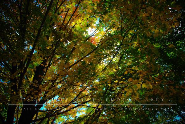 Autum canopy