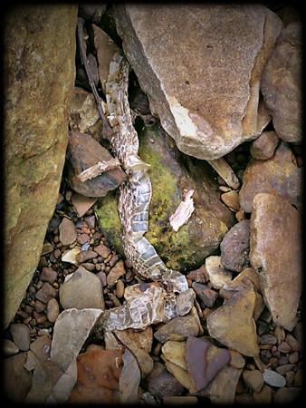 Snake Skin (Giant City State Park, Illinois)  Little Photo